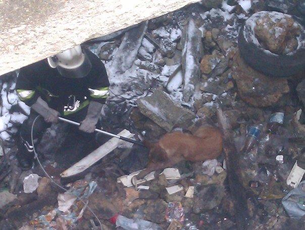 В Симферополе спасли жизнь собаке, которая провалилась в 5-метровый погреб (ФОТО), фото-1