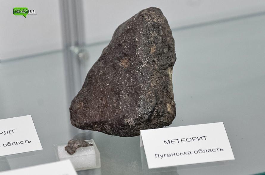 В геологическом музее Луганского национального университета можно увидеть останки мамонтов и отпечаток доисторической стрекозы (ФОТО), фото-7