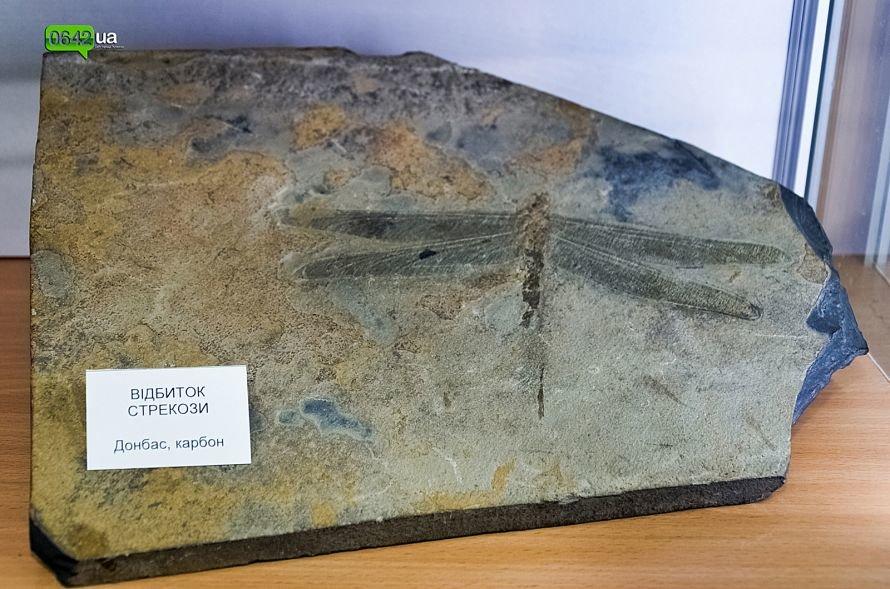 В геологическом музее Луганского национального университета можно увидеть останки мамонтов и отпечаток доисторической стрекозы (ФОТО), фото-6