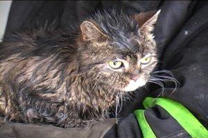 В Полтаве пожарные спасли чудом выжившего в огне и дыму кота, фото-1