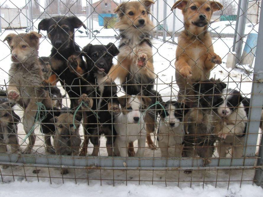В прошлом году 244 собаки нашли свою семью при посредничестве Кременчугского КП Спецсервис (ФОТО), фото-1