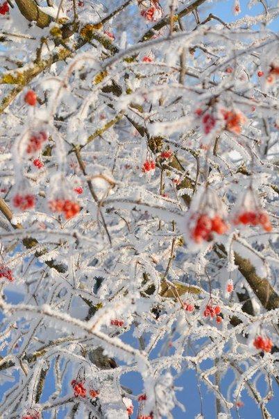 zima ternopiliani 11
