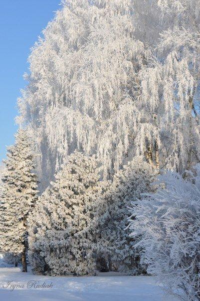 zima ternopiliani 8