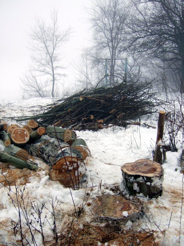 В донецком парке спиливают деревья (фото), фото-1