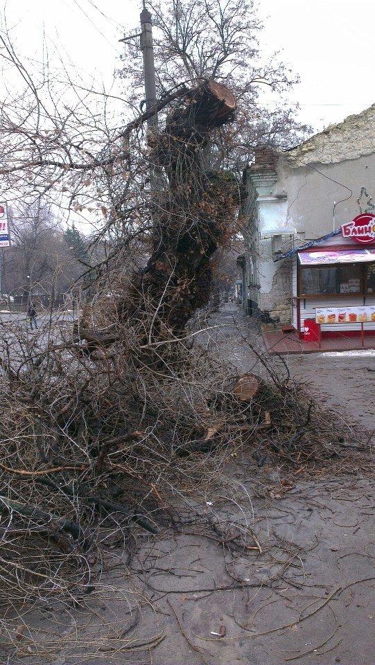 тертышников дерево