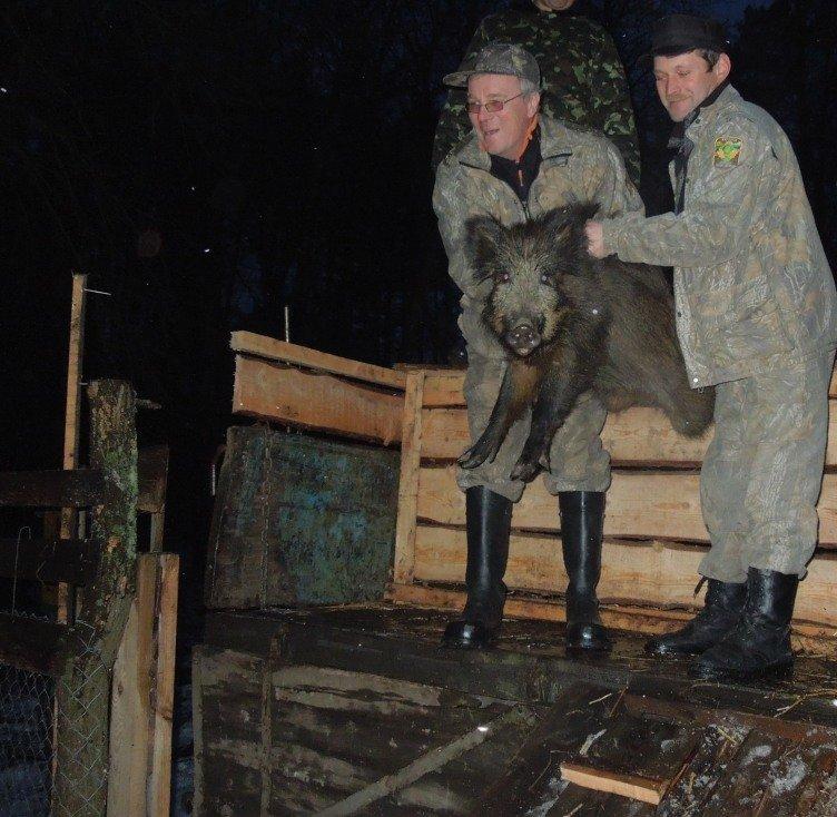 Леса Полтавщины пополнились дичью, фото-1
