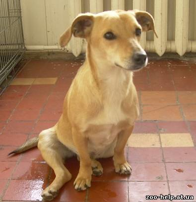 В Мариуполе зоозащитники разыскивают хозяина для собаки-инвалида (ФОТО), фото-1