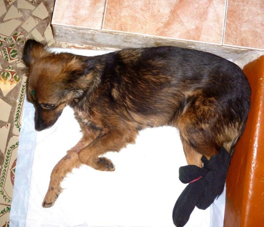 Осторожно: живодеры! В Мариуполе неизвестные мучают кошек и собак (ФОТО), фото-3