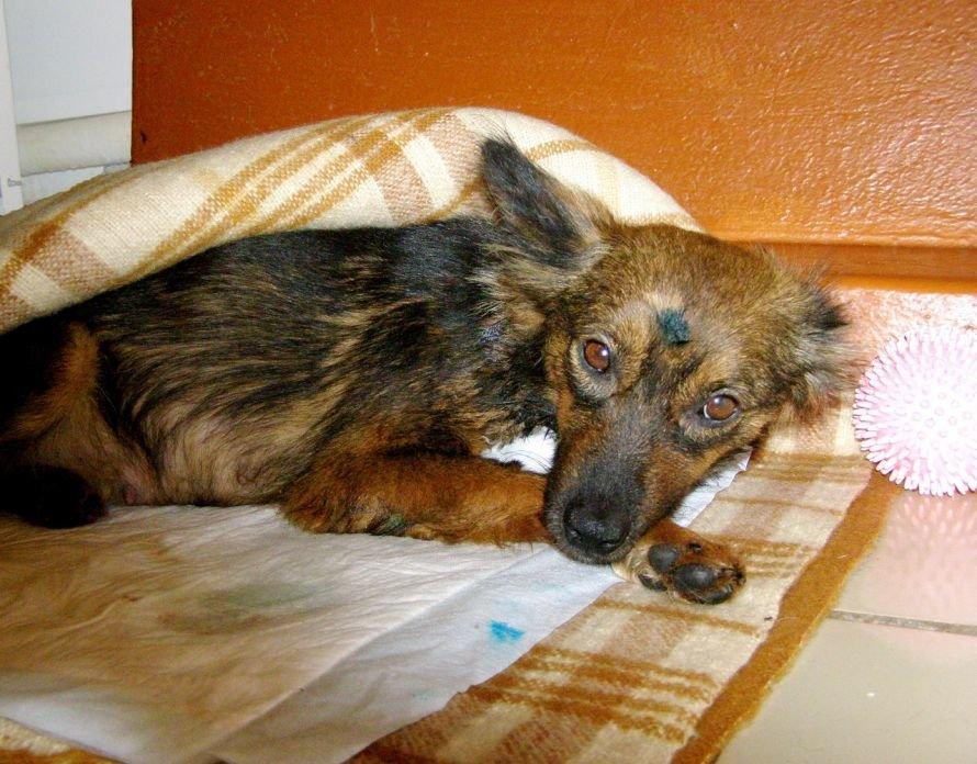 Осторожно: живодеры! В Мариуполе неизвестные мучают кошек и собак (ФОТО), фото-1