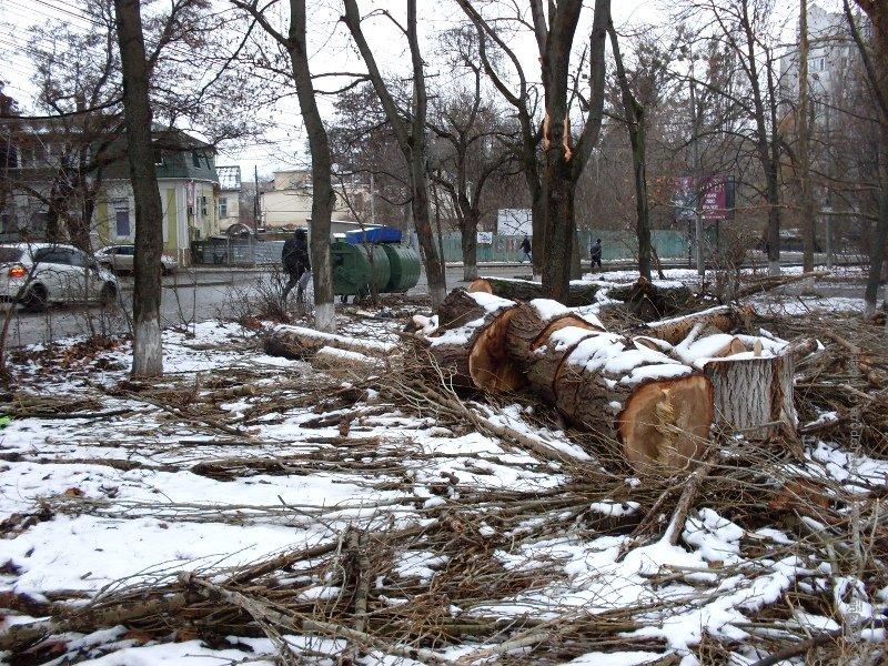 В Симферополе продолжают вырубать Гагаринский парк (ФОТО), фото-2