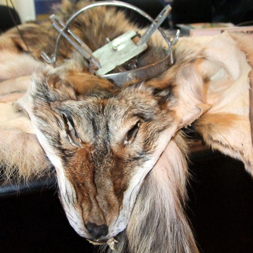 Идет охота на волков: в Донбассе разжигается биоксенофобия, фото-3