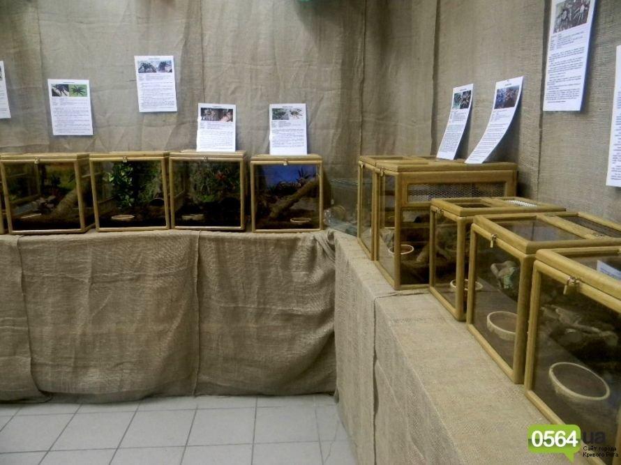 В Кривом Роге работает уникальная выставка пауков и рептилий (ФОТО), фото-10