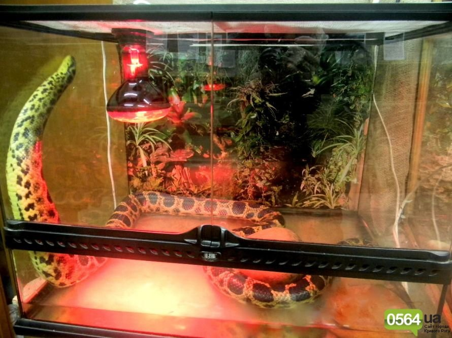 В Кривом Роге работает уникальная выставка пауков и рептилий (ФОТО), фото-1