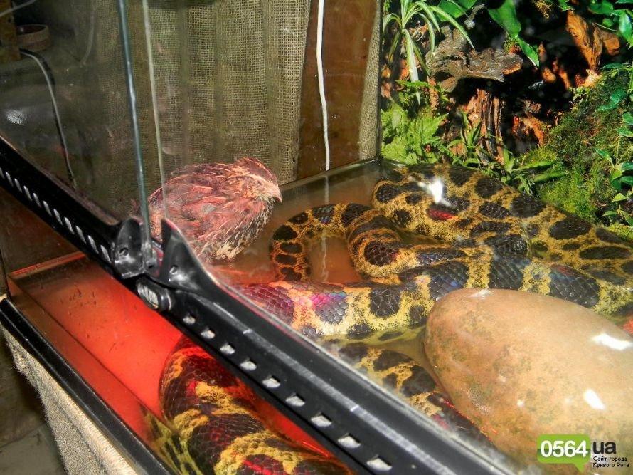В Кривом Роге работает уникальная выставка пауков и рептилий (ФОТО), фото-17