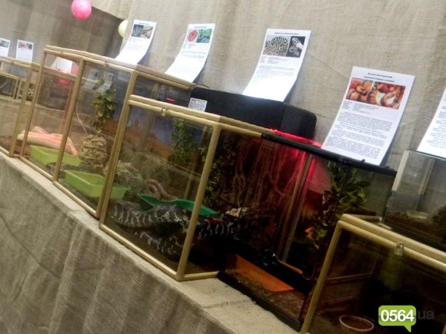 В Кировограде работает уникальная выставка пауков и рептилий (ФОТО), фото-6