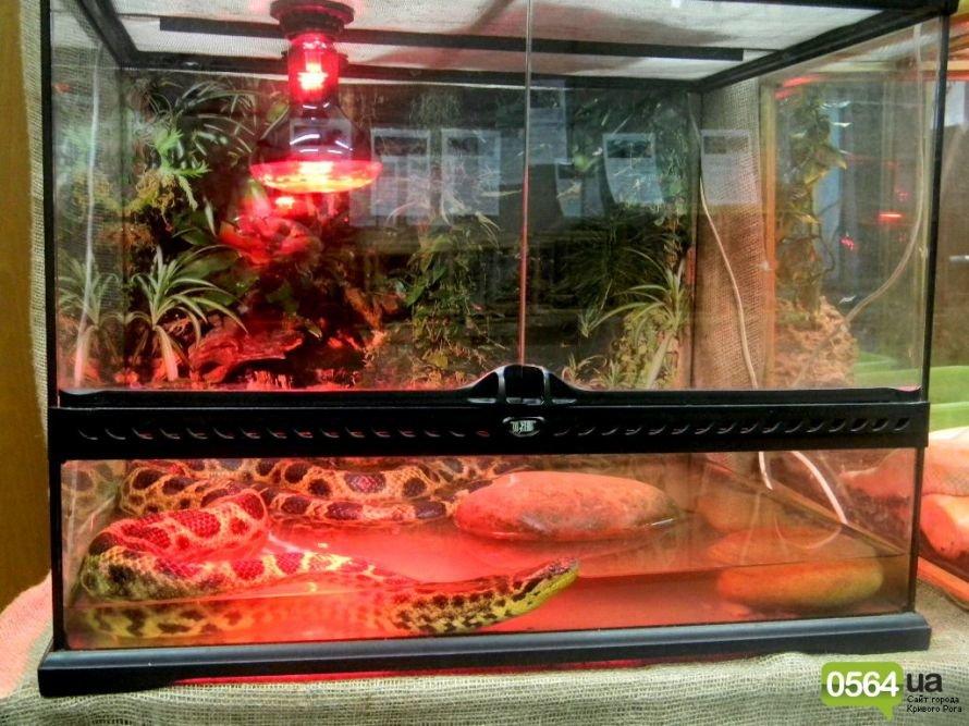 В Кривом Роге работает уникальная выставка пауков и рептилий (ФОТО), фото-14