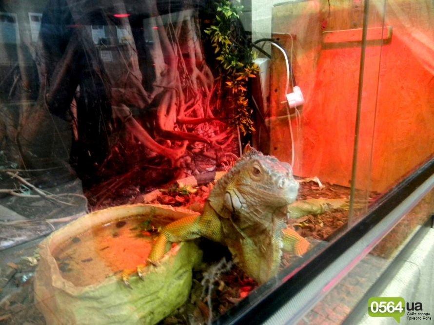 В Кривом Роге работает уникальная выставка пауков и рептилий (ФОТО), фото-8