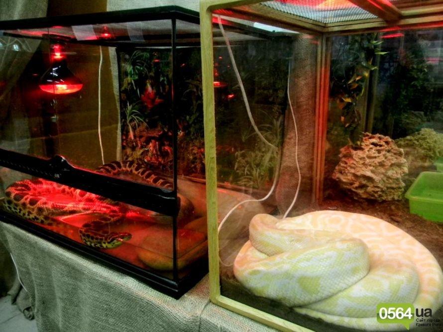 В Кривом Роге работает уникальная выставка пауков и рептилий (ФОТО), фото-15