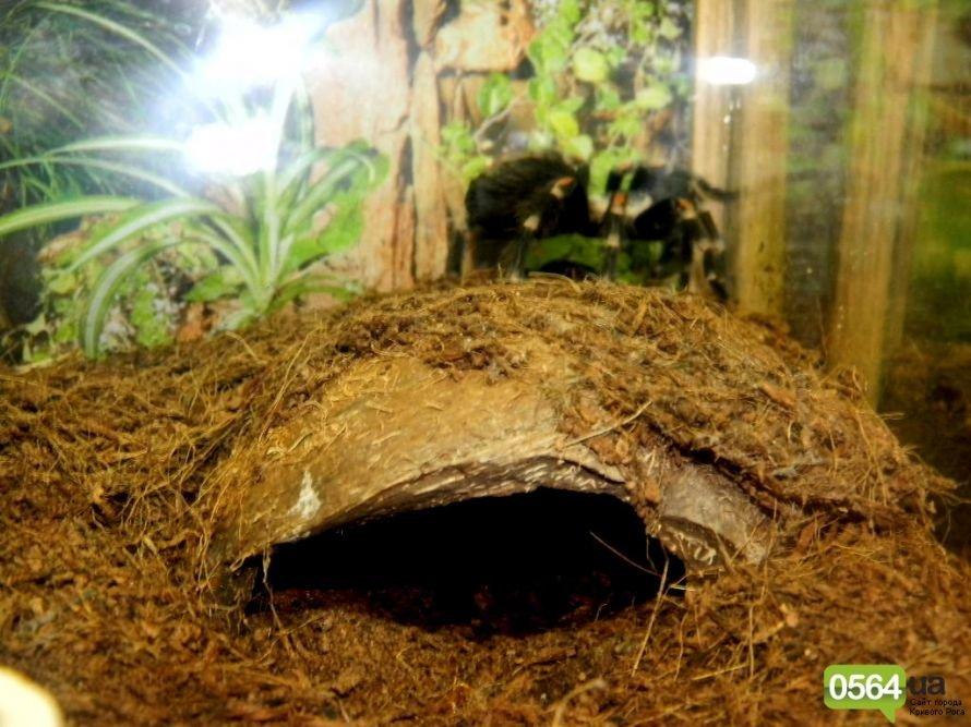 В Кривом Роге работает уникальная выставка пауков и рептилий (ФОТО), фото-16
