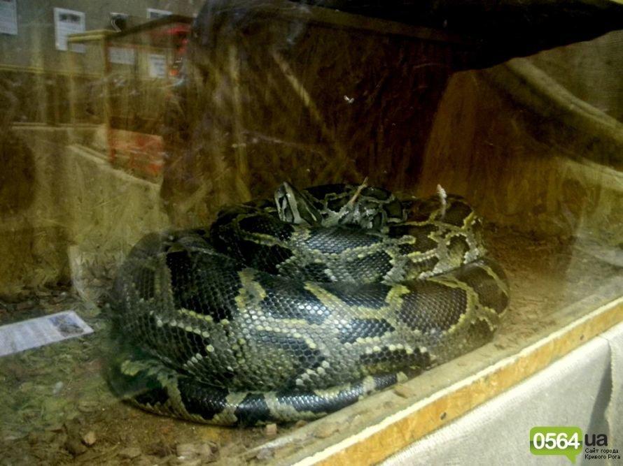 В Кривом Роге работает уникальная выставка пауков и рептилий (ФОТО), фото-6