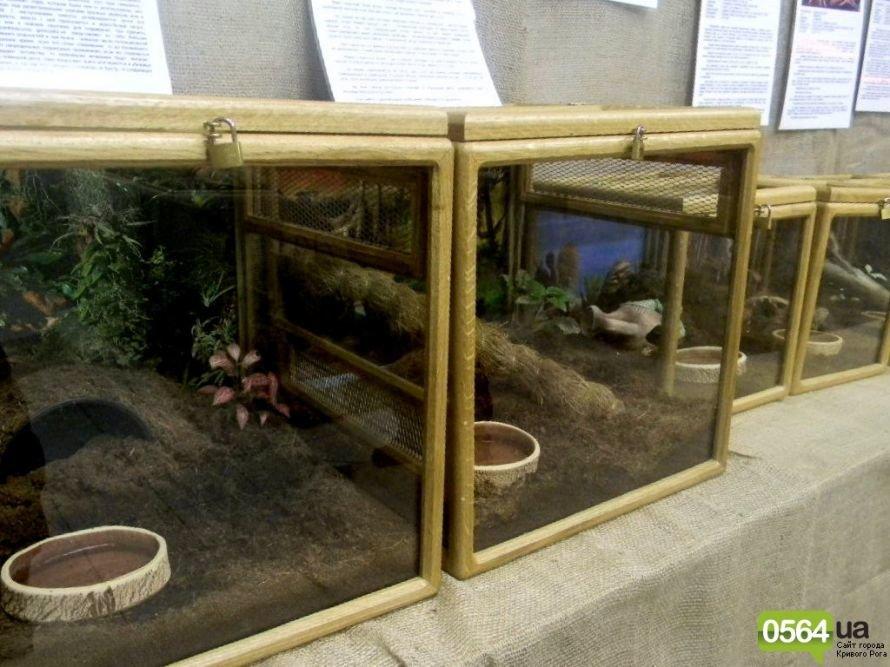 В Кривом Роге работает уникальная выставка пауков и рептилий (ФОТО), фото-7