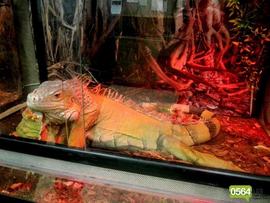В Кривом Роге работает уникальная выставка пауков и рептилий (ФОТО), фото-11