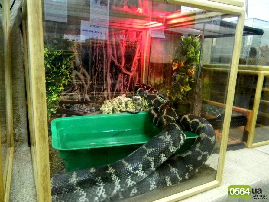 В Кривом Роге работает уникальная выставка пауков и рептилий (ФОТО), фото-2