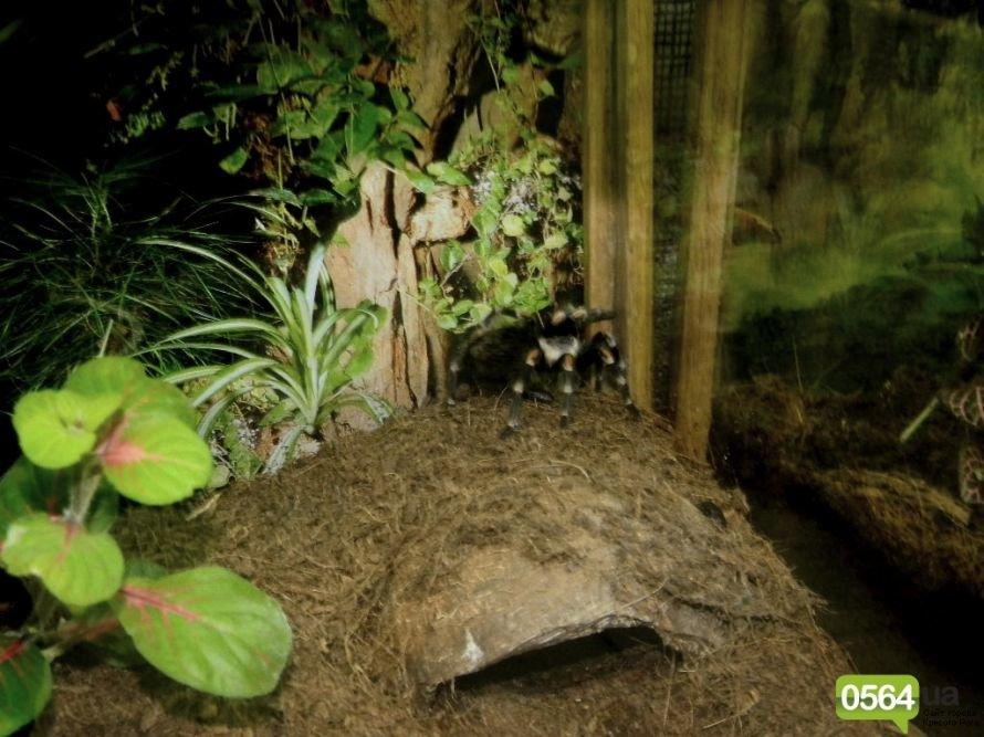 В Кривом Роге работает уникальная выставка пауков и рептилий (ФОТО), фото-12