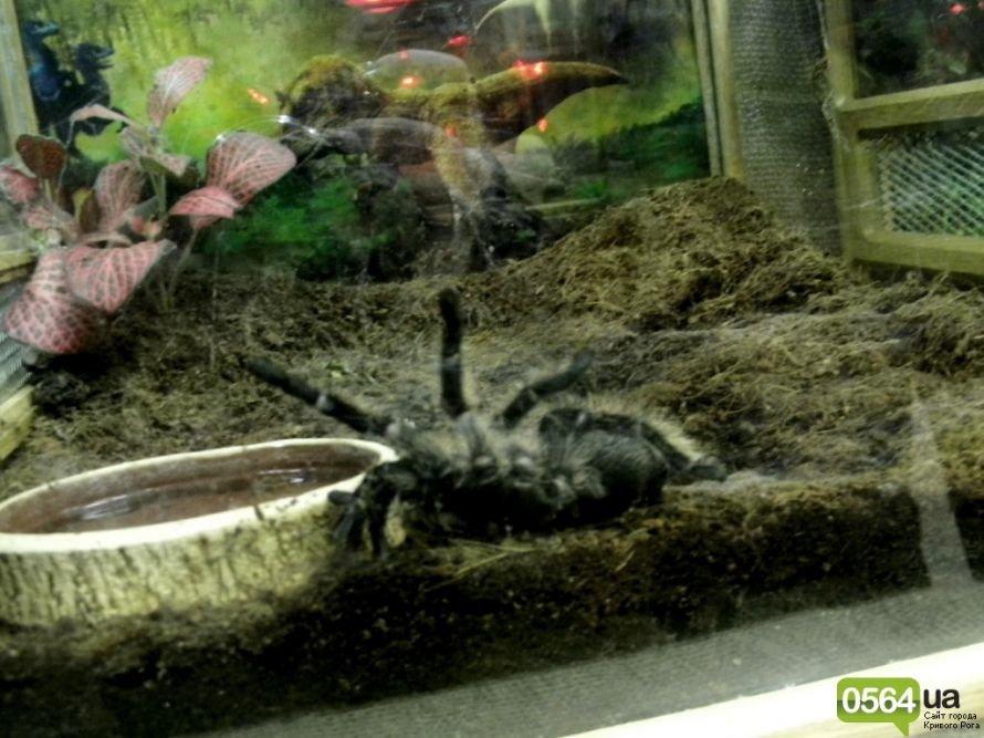 В Кривом Роге работает уникальная выставка пауков и рептилий (ФОТО), фото-3