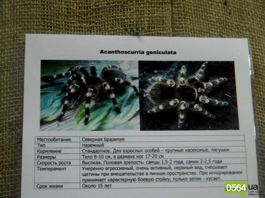 В Кривом Роге работает уникальная выставка пауков и рептилий (ФОТО), фото-4
