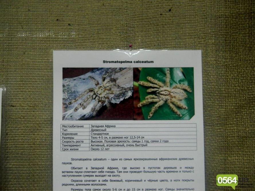 В Кировограде работает уникальная выставка пауков и рептилий (ФОТО), фото-10