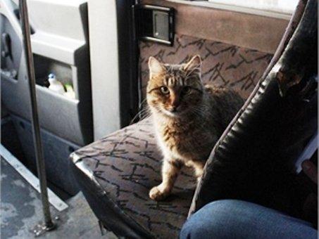 Днепропетровский маршрутчик дарит пассажирам микроавтобуса позитивное настроение при помощи... спасенной от смерти кошки (ФОТО), фото-1