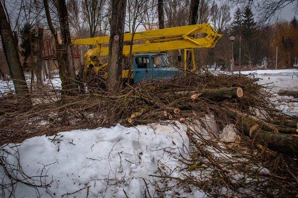 В тернопільському парку активно вирубують дерева під нову забудову? (Фото), фото-1
