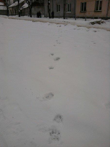 У Тернополі завівся невідомий звір (фото), фото-1