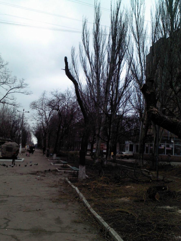 Деревья Хмельницкого 1