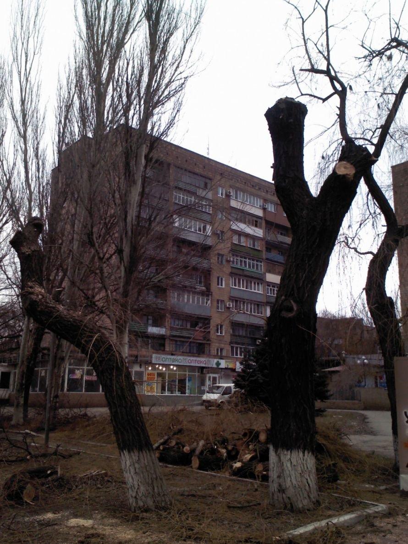 Деревья Хмельницкого 2