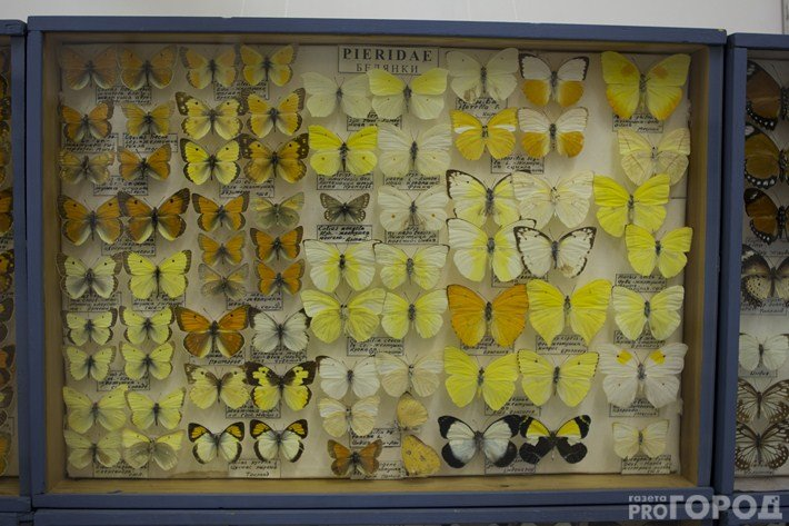 Ночные бабочки чебоксары — img 9