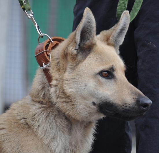 В Мариуполе собака несколько месяцев прожила в луже (ФОТО + ВИДЕО), фото-4