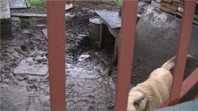 В Мариуполе собака несколько месяцев прожила в луже (ФОТО + ВИДЕО), фото-2