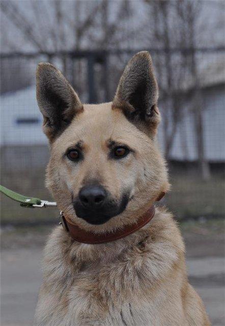 В Мариуполе собака несколько месяцев прожила в луже (ФОТО + ВИДЕО), фото-5