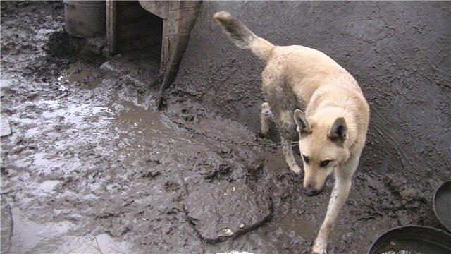В Мариуполе собака несколько месяцев прожила в луже (ФОТО + ВИДЕО), фото-1