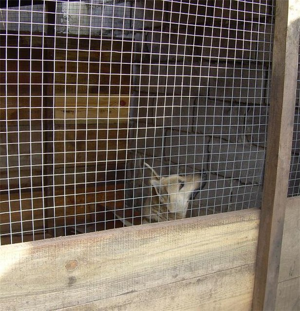 В Мариуполе собака несколько месяцев прожила в луже (ФОТО + ВИДЕО), фото-3