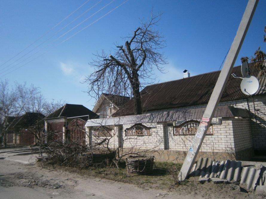 «Херсоноблэнерго» проводит обрезку деревьев, фото-1
