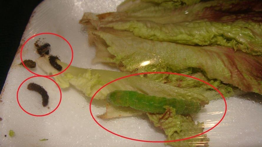 В Красноармейском «ЭКО-маркет» торгуют червями по 100 гривен, фото-1