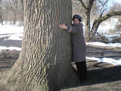 В Донецкой области объявлен памятником природы 300-летний дуб, фото-1