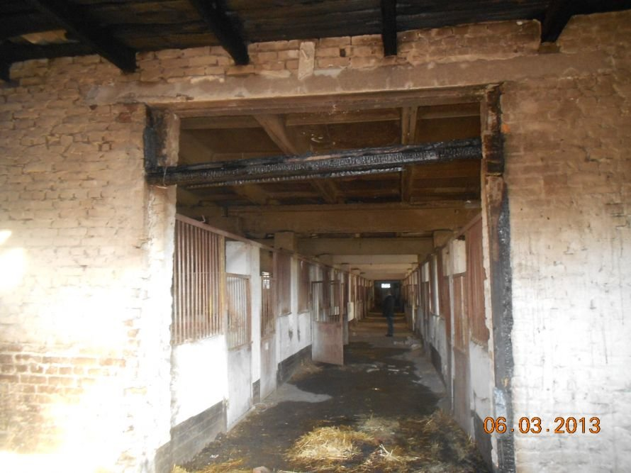 Олександрійський район: під час пожежі на кінному заводі з приміщення вивели понад 85 коней, фото-2