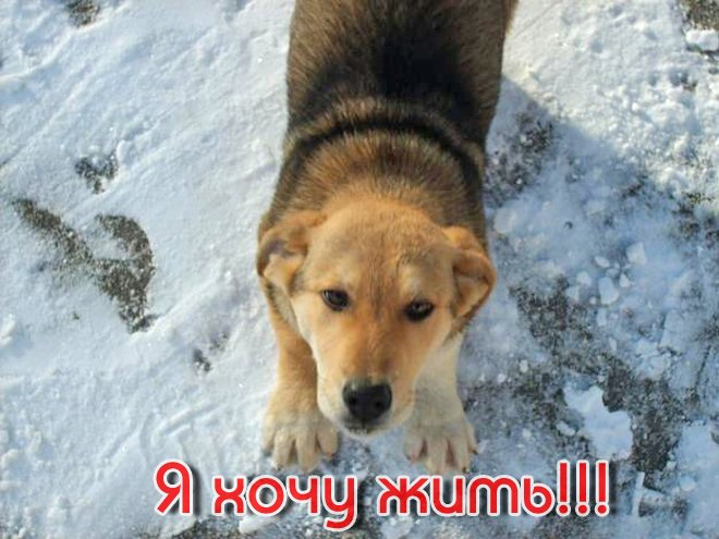Жестокое убийство собак в г.Енакиево., фото-1