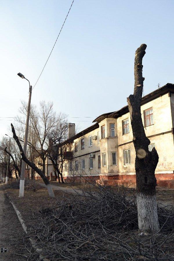 В Горловке власти начали работать над имиджем города: кронируют целые улицы, фото-6
