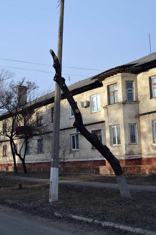В Горловке власти начали работать над имиджем города: кронируют целые улицы, фото-2