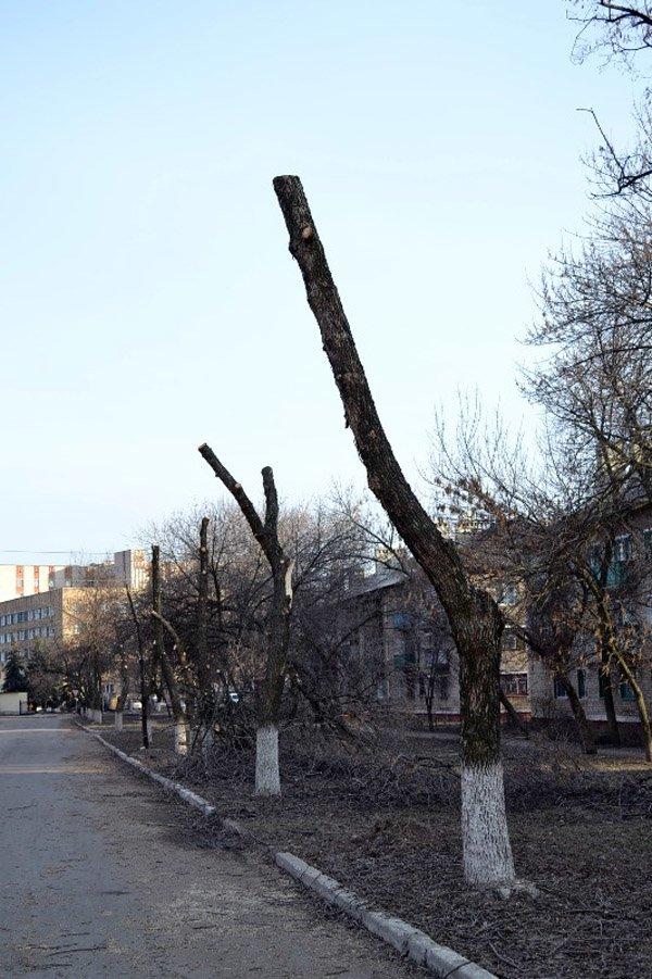 В Горловке власти начали работать над имиджем города: кронируют целые улицы, фото-3